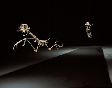 Geococcyx Animatus & Canis Latrans Animatus