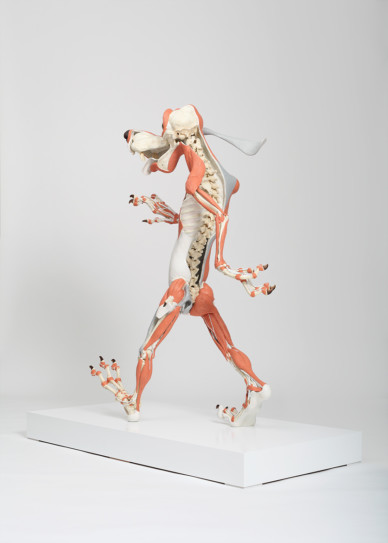 Canis D Animatus (muscle attachment)